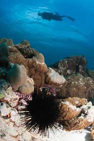 Haie Seychellen beim tauchen beobachten
