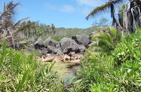 Reisezeit Seychellen in der Natur