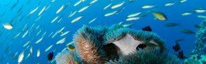 Seychellen Tauchen - Schnorcheln - Haie